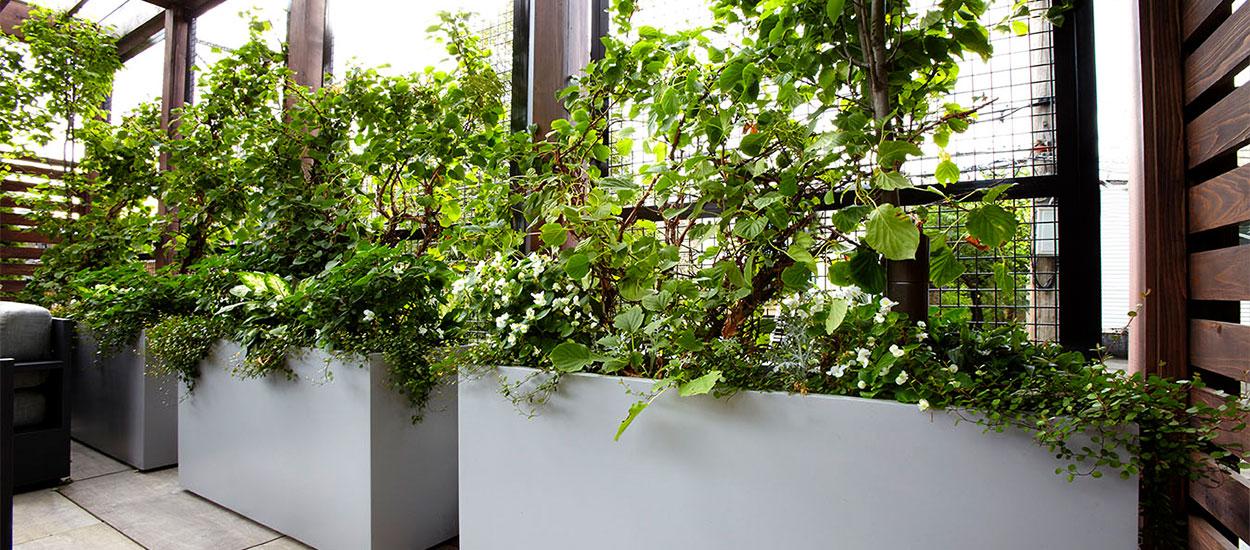 ravenswood-hidden-garden-img-3
